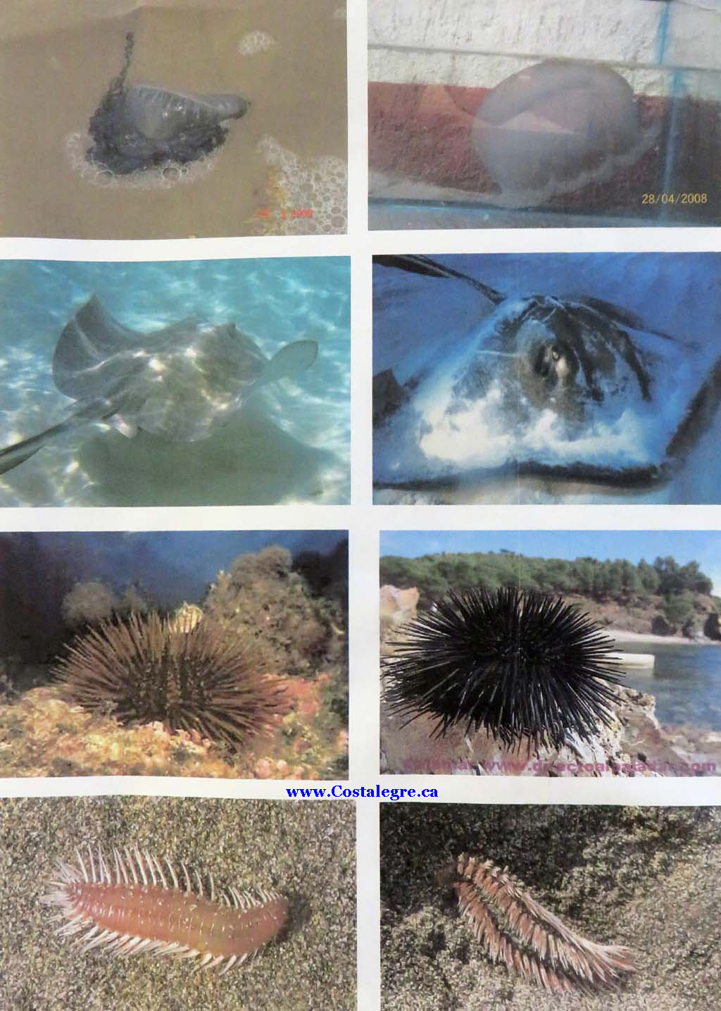 DangerousMarineAnimals 1024